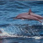 Tako, kot so delfini zanimivi za nas smo tudi mi zanje