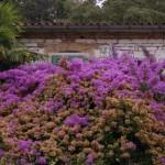 Na sprehodu smo veseli lepih barv in prijetno dišečih cvetov
